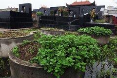 Rau trồng ở nghĩa địa, ăn dễ mắc bệnh