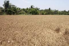 """Điều phi lý ở """"vương quốc"""" lúa gạo"""