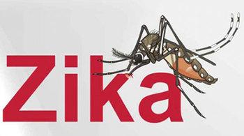 Muỗi truyền virus Zika lưu hành phổ biến tại Hà Nội