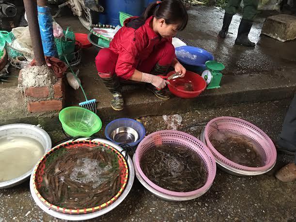Tôm đắt kỷ lục, chợ Hà Nội lên cơn sốt