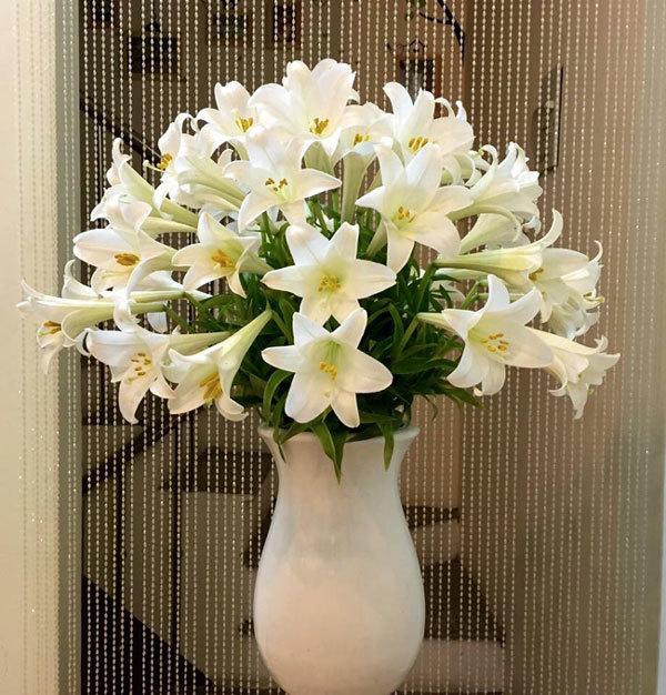 10X Hà thành xinh đẹp, duyên dáng bên sắc hoa loa kèn - Áo
