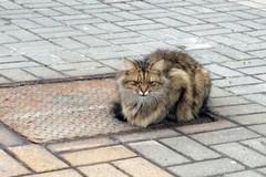 Chú mèo đợi chủ suốt 1 năm tại đúng nơi bị bỏ rơi