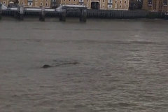 Thêm clip bằng chứng về quái vật trên sông Thames