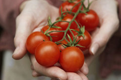 """Phát hiện """"Viagra tự nhiên"""" trong cà chua"""