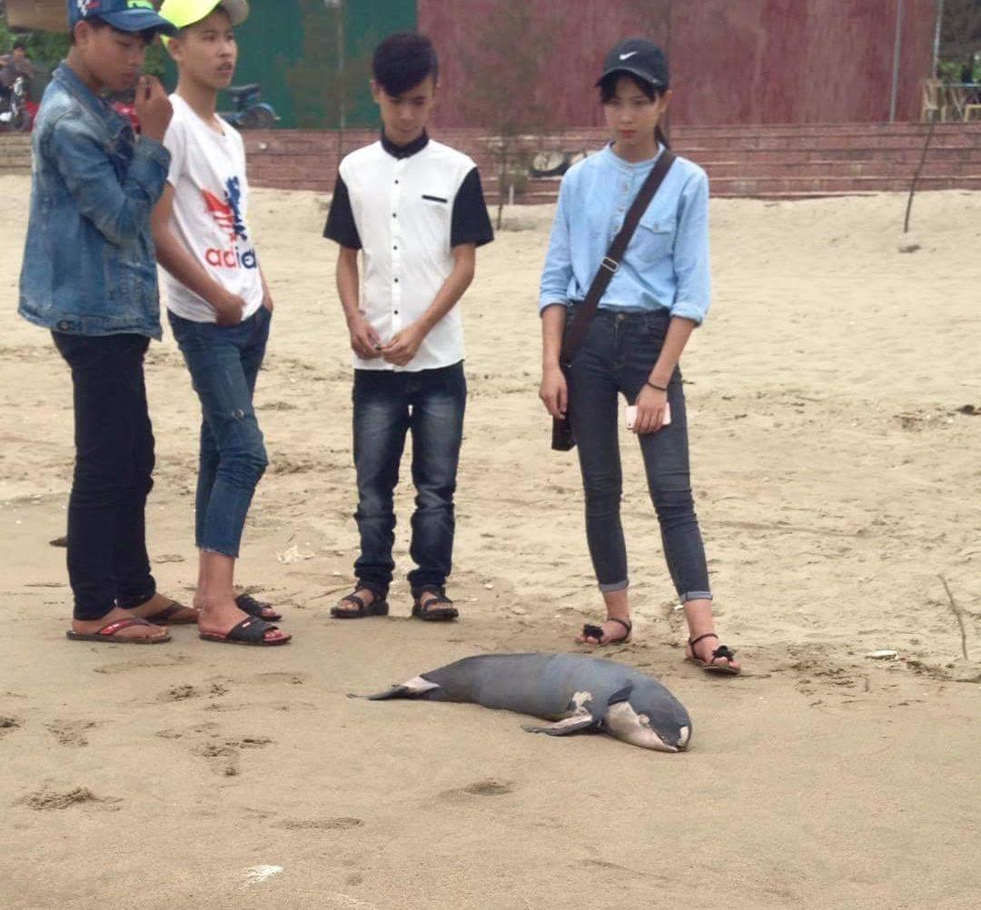 Nghệ An: Một tháng 3 con cá voi dạt vào bờ