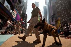Sự thật về chó chiến binh 'huyền thoại' của Mỹ