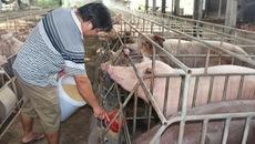 Chủ trang trại lợn bỏ nghề tiết lộ điều khủng khiếp về chất cấm