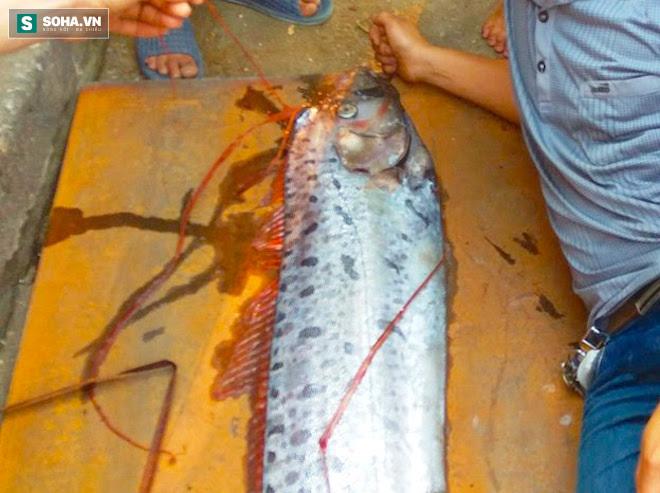 Bắt được 'thủy quái' dài gần 4m còn sống ở Nghệ An