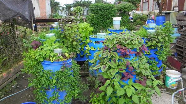 trồng rau sạch, tháp trồng rau, vườn rau ban công, trồng rau thùng xốp