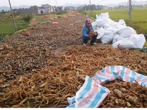 Người Việt bán dược liệu quý, nhập rác TQ về chữa bệnh