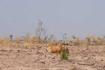 Tây Nguyên trong cơn đại hạn,khô hạn