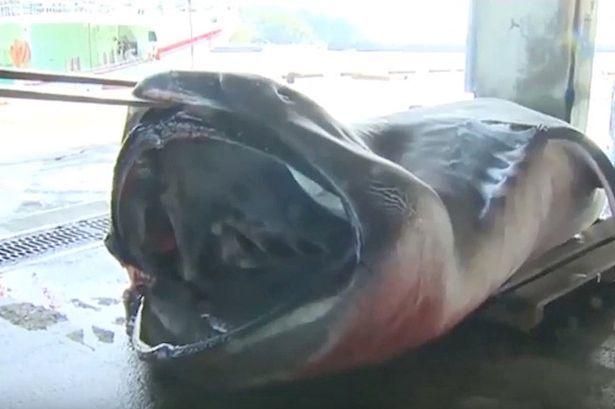 Bắt được thuỷ quái biển sâu tại Thái Lan