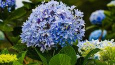 Có một Bà Nà bốn mùa hoa