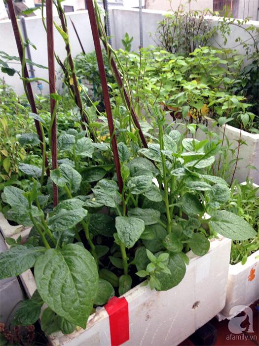 trồng rau, trồng rau ở ban công, trồng rau trên sân thượng, tự trồng rau ở nhà, trồng rau trong thùng xốp