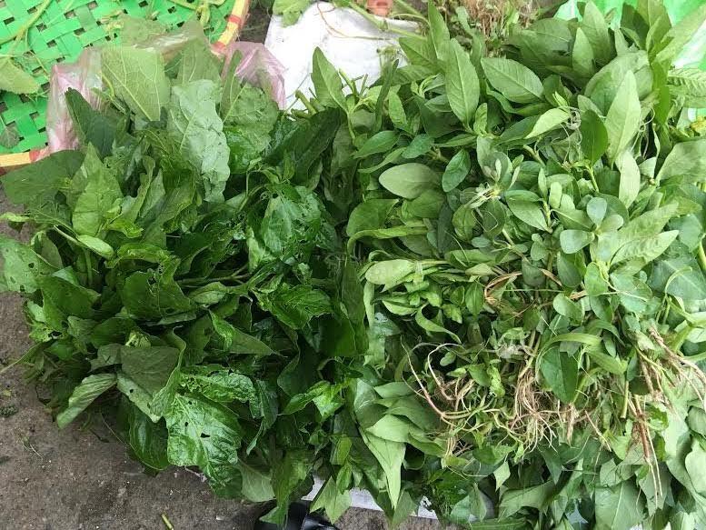 Sợ dính độc, mỗi ngày chỉ ăn 2 bó rau dại