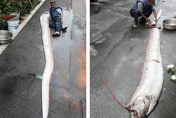 Bắt được 'thuỷ quái' dài 5m ở bờ biển