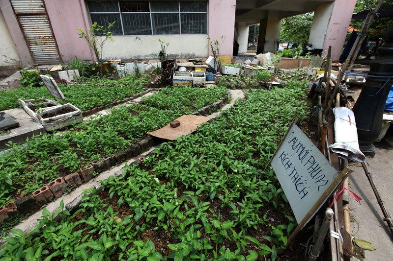 Dân trồng rau sạch rồi dọa 'mới phun thuốc'
