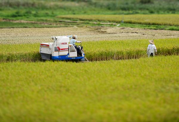 robot làm nông dân, nông nghiệp, máy trồng cây, chế tạo máy nông nghiệp, nông sản