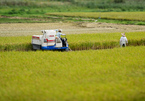 Siêu nông dân thời @: Lùa robot ra đồng