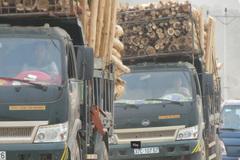 Xe chở gỗ cao ngút, lắc lư 'dọa' người đi đường