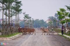 Phơi miến, chăn bò tại dự án mới của đại gia 'điếu cày'
