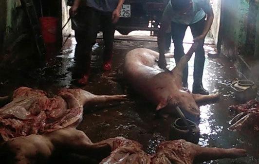 Đường dây tuồn lợn chết giá bèo từ biên giới về Hà Nội