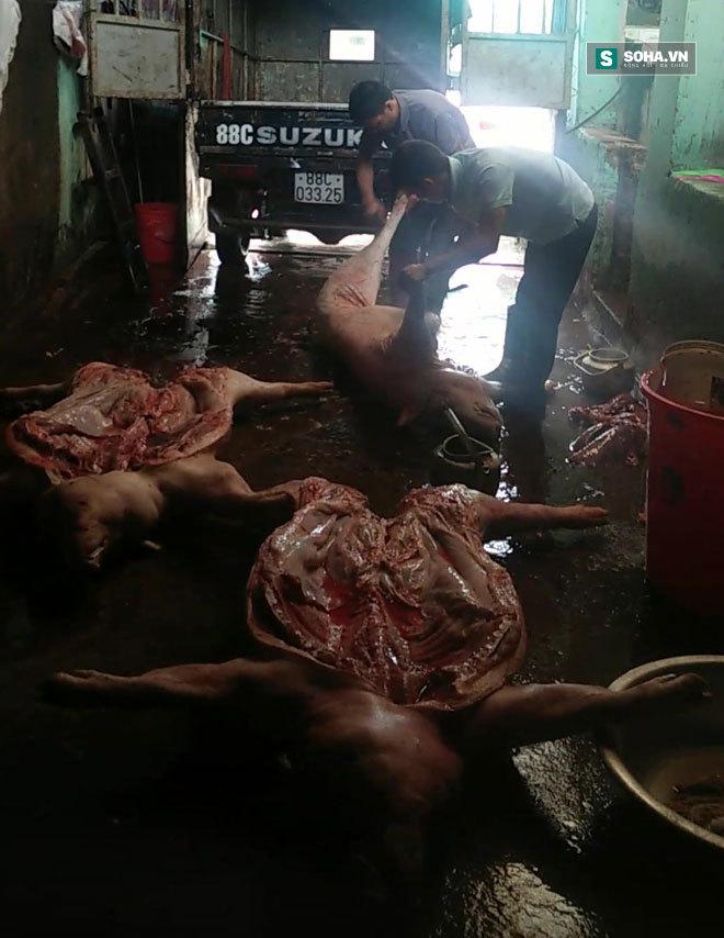 lợn chết, đường dây buôn bán lợn chết, lợn từ biên giới, lợn chết giá siêu rẻ