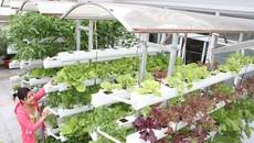Dễ dàng thủy canh tại nhà giúp bạn có vườn rau xanh mơn mởn