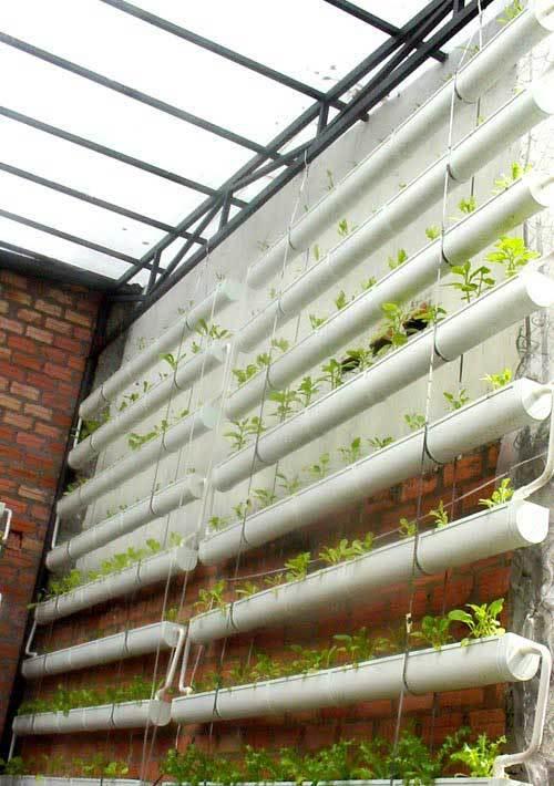 trồng rau thủy canh, trồng rau tại nhà, rau sạch, kinh nghiêm trồng rau thủy canh