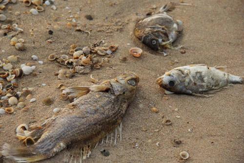 Cá chết hàng loạt gần Vũng Áng, Hy sinh môi trường cho tăng trưởng, Kết luận vụ cá chết hàng loạt