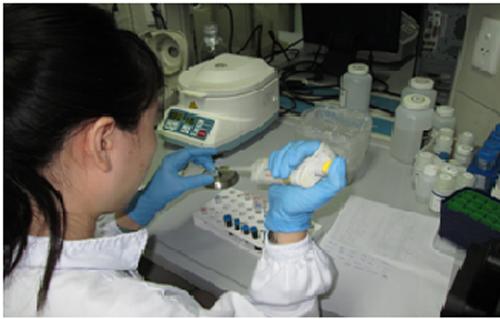 Đứa con sinh ra từ cưỡng bức và bí mật trong phòng XN ADN