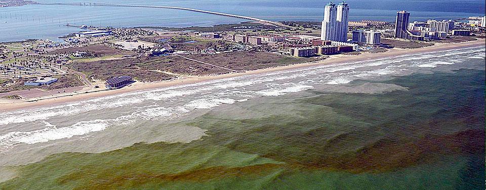 Thủy triều đỏ, giáp xác, ngư trường, tảo độc, hồng triều
