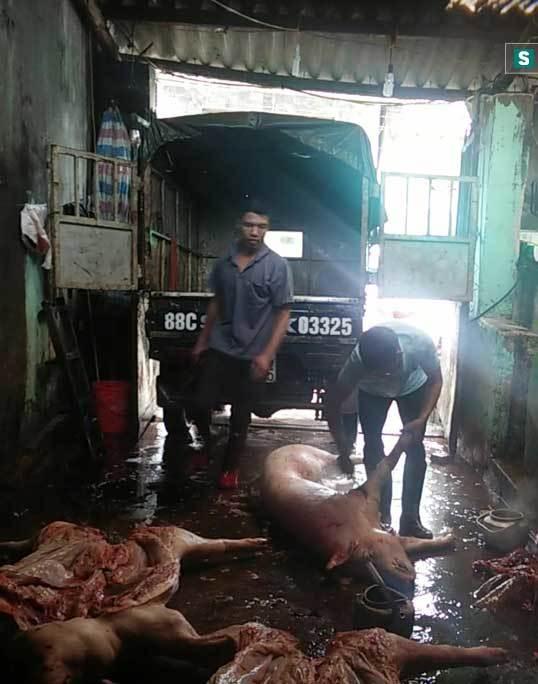 thịt lợn chết, đường dây buôn bán lợn chết, chợ đầu mối bán thịt lợn chết, thịt lợn bẩn, chợ hà nam