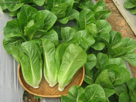 Rau sạch, rau tự trồng có an toàn không?