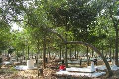 Một ngày tháng Tư thăm nghĩa trang quân đội chế độ cũ