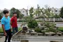 30/4 đến Vinhomes Riverside ngắm bonsai bạc tỷ