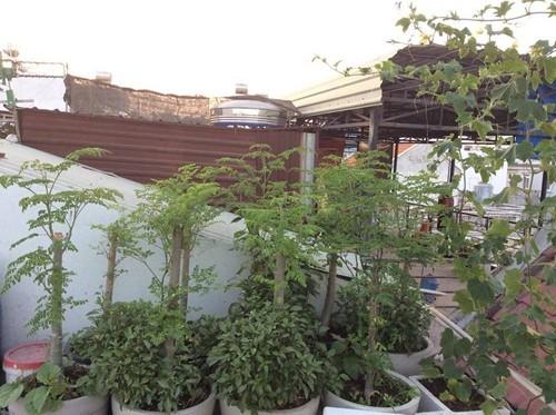 trồng rau sạch, trồng rau thùng xốp, vườn rau ban công
