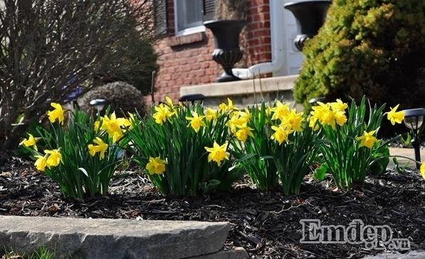 Vườn hoa, làm vườn, mẹ Việt trên đất Mỹ