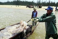 BIDV đề xuất tạm dừng tính lãi ngư dân 4 tỉnh
