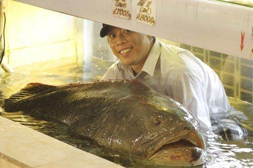 Nhậu cá 'khủng': Ăn từ da đến xương