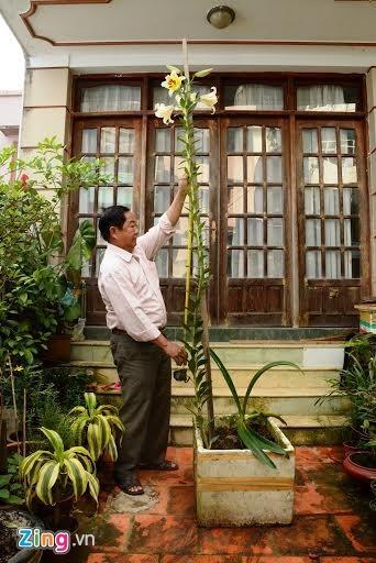 Cây hoa ly cao 2,5 m ở Đà Lạt