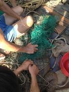 """Cá sấu """"khủng"""" dài gần 2m trên sông Soài Rạp đã sa lưới"""