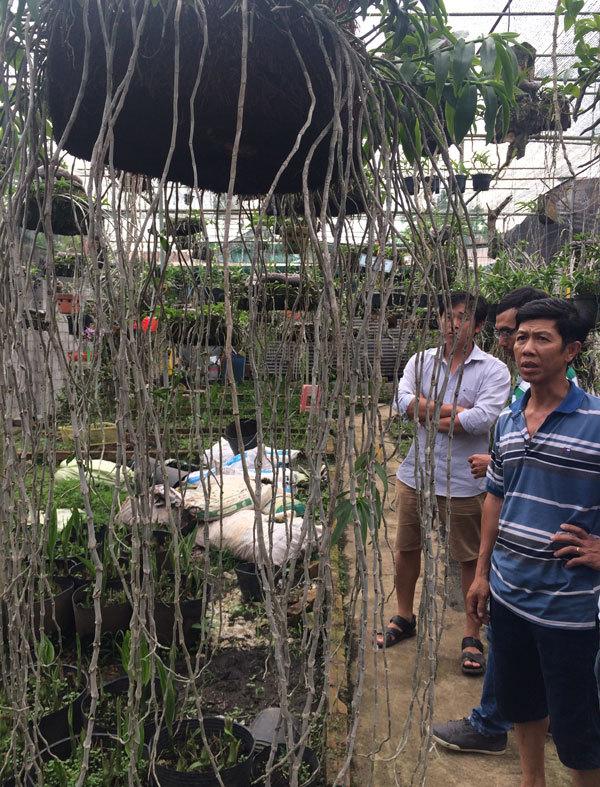 'Đột nhập' vườn lan rừng quý hiếm nhất Việt Nam