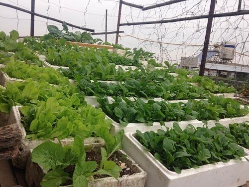 Trai Hà thành trồng dưa hấu, dưa leo, dưa lưới 'khủng' tại nhà
