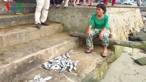 Cá biển, cá nuôi lồng chết hàng loạt ở Thừa Thiên - Huế