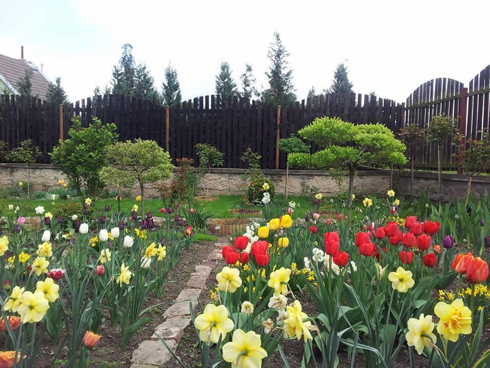 Khu vườn toàn hoa và sỏi