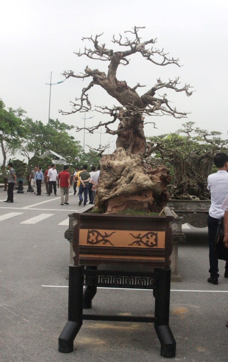 Siêu phẩm tiền tỷ: Gốc cây trăm tuổi nửa sống nửa chết - ảnh 3