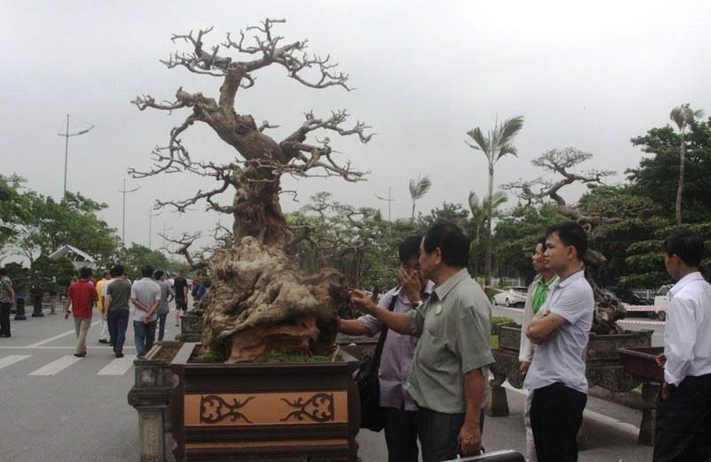 Siêu phẩm tiền tỷ: Gốc cây trăm tuổi nửa sống nửa chết - ảnh 4