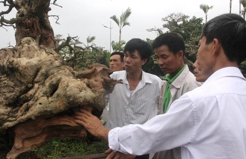Siêu phẩm tiền tỷ: Gốc cây trăm tuổi nửa sống nửa chết - ảnh 6