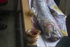 Phát hiện xác cá hố khủng dạt trên biển Đà Nẵng